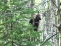トレイル近くに熊がいた!