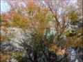 2017年11月12日(日)東石川第4公園紅葉